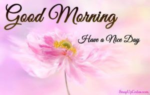 good-morning-messages-for-friends-with-pictures-images-wishes-photos-viral-status indianmemoir.com