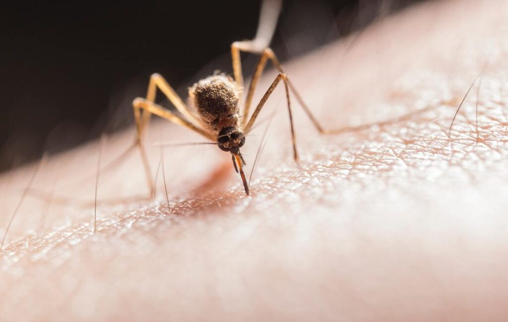Lifestyle Tips 10+ ways for a mosquito-free home, Try Now www.indianmemoir.com